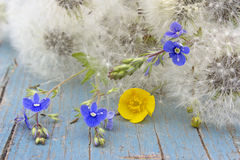 Summer flower background. With fluffy dandelions Royalty Free Stock Images
