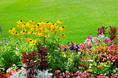 Summer flower bed and green lawn Stock Photography
