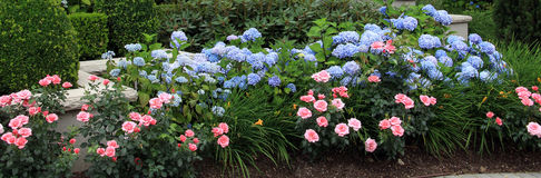 Summer flower bed. Royalty Free Stock Photography