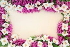 Summer Flower Border Stock Images