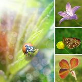 Summer flower collage Stock Images