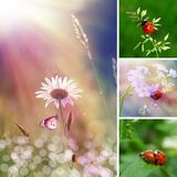 Summer flower collage Stock Photography