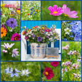 Summer flower collage Royalty Free Stock Photo
