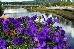 Summer flower display along the Chena River Stock Image