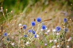 Summer Flower Field Stock Photos