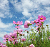 Summer flower garden. With blue sky Royalty Free Stock Images