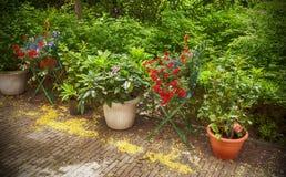 Summer flower garden stock image