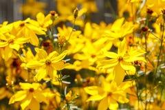 Summer flower in garden Stock Images