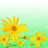 Summer flower on green abstract background Royalty Free Stock Image