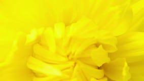 Summer flower  macro blooming Stock Image
