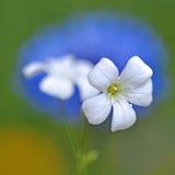 Summer flower Stock Photos