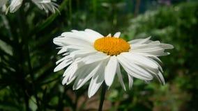 Summer flower nature stock video footage