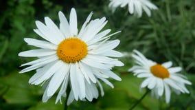Summer flower nature stock video