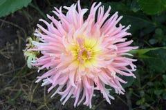 Summer flower Stock Photography
