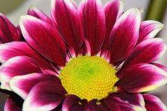 Summer flower Stock Images