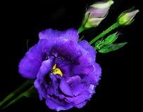 Summer flower Royalty Free Stock Photo