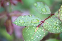 Summer flower in raindrops royalty free stock photography