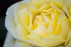 Summer flower in raindrops stock images