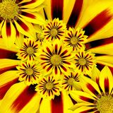 Summer Flower, Sun, Yellow, Collage Stock Photography