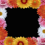Summer flower vector frame Royalty Free Stock Photos