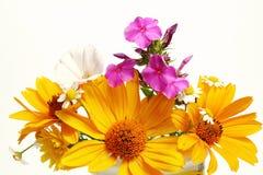 Summer flowers Stock Photos