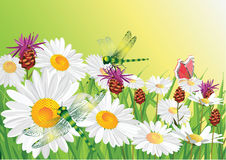 Free Summer Flowers. Royalty Free Stock Photography - 12304837