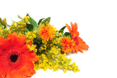 Summer Flowers Stock Photography