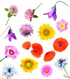 Summer flowers. Collection isolated on white background Stock Images