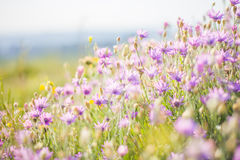 Summer flowers Royalty Free Stock Photos