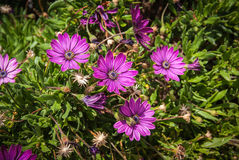 Summer flowers, Andalusia, Spain Stock Photos