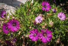 Summer flowers, Andalusia, Spain Stock Photography