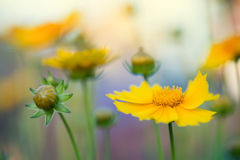 Summer flowers as a background Stock Image