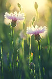 Summer flowers as a background Royalty Free Stock Photos