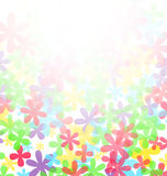 Summer flowers background Stock Image