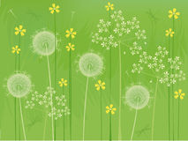 Summer flowers background. Green natures background with flowers and dragonfly Royalty Free Stock Image