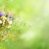 Summer flowers background. Bouquet of summer flowers  with green bokeh and copy space,  floral background Stock Images