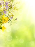 Summer flowers background Royalty Free Stock Images