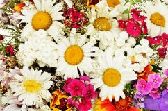 Summer flowers background with chamomile. Close-up Royalty Free Stock Photos