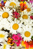 Summer flowers background with chamomile. Close-up Royalty Free Stock Images