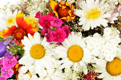 Summer flowers background with chamomile. Closeup Stock Image