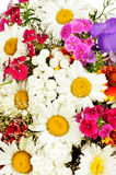 Summer flowers background with chamomile Royalty Free Stock Photos