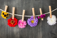 Summer flowers background Stock Images