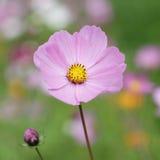 Summer flowers background Stock Image