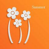 Summer flowers background. Summer white flowers on orange background Stock Images