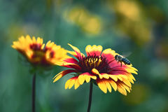 Summer flowers. With a bee hovering Stock Photos