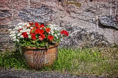 Summer flowers in a big pot. stock photo