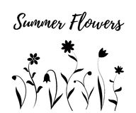 Summer flowers in black and white. Vector illustration  on white Royalty Free Stock Photos