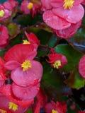 Pretty Pink Flowers Stock Photo