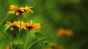 Summer flowers blooming HD stock footage