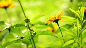 Summer flowers blooming stock footage